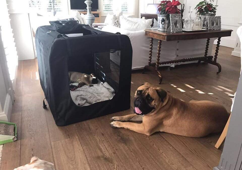Help Your Dog Fall In Love With His Crate