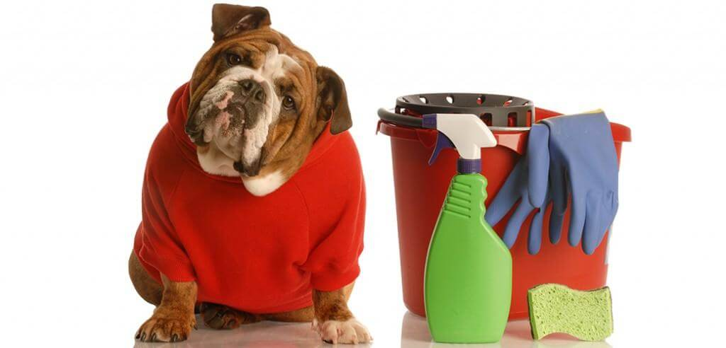 HOUSEHOLD CLEANING AND YOUR PET: WHAT YOU SHOULD KNOW