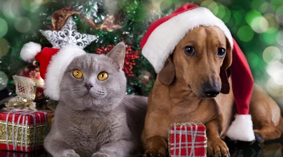 A BUSY FESTIVE SEASON PREDICTED FOR SANTA PAWS