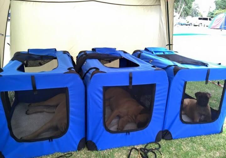 SHOW DOGS: SAFE, CONTAINED AND COMFORTABLE IN SOFT CRATES!