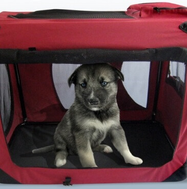 CRATE TRAINING YOUR PUPPY IS A KINDNESS