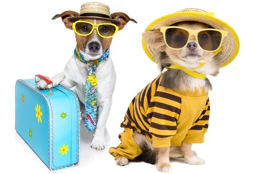 THE RIGHT CARRIER MAKES TRAVELLING WITH YOUR PET A BREEZE!