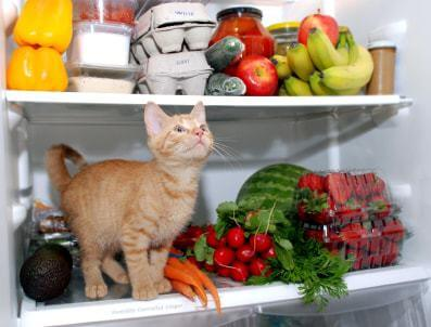 9 Things You Should Never Feed Your Cat