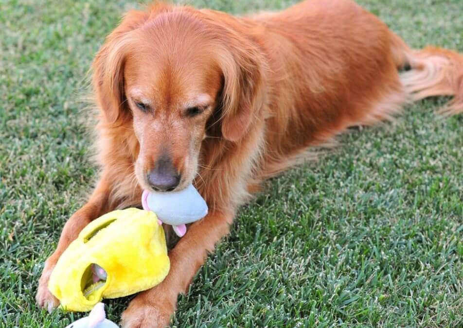 A Dog Toy with a Difference – Interactive Dog Puzzles now available in South Africa