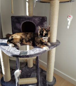 cat trees, scratching posts, cat furniture
