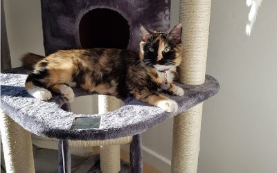 5 Helpful Hints To Make a New Scratching Post a Favourite With Your Feline