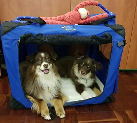 Pet carrier, dog crate
