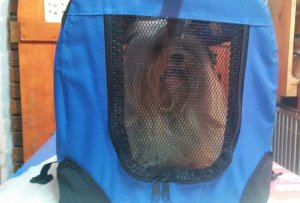 Cosmic-Pets-travel-cages-for-dogs
