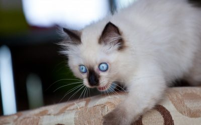 CAT SCRATCHING DRIVING YOU CRAZY? FROM MENACE TO MODEL CITIZEN