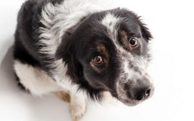 TAKE THE FRIGHT OUT OF FESTIVAL FIREWORKS- A PRACTICAL GUIDE FOR SOUTH AFRICAN DOG OWNERS