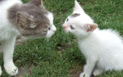 7 TIPS: INTRODUCING A NEW KITTEN TO OLDER CATS