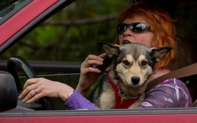 TREAT PETS LIKE A HUMAN PASSENGER IN YOUR VEHICLE