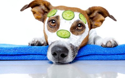Easy Do-It-Yourself Home Dog Grooming Guide