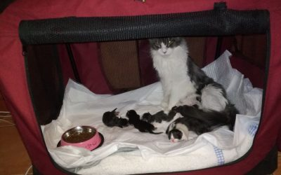 Using A Soft Crate As A Cat Birthing Box