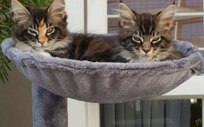 5 Steps: Keep Your Cat Trees Looking Like New!