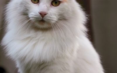 How To Choose A Cat Urine Stain & Odour Removal Product That Actually Works