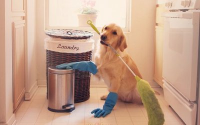 Spring Cleaning Tips for Dog Owners You Wish You Already Knew!
