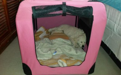 Portable, soft crates that are also indoor kennels