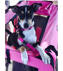 dog crate pet carrier