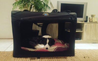 Black Pet Carriers and Dog Crates – Happy Clients (Video)