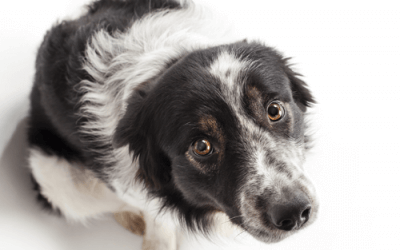 Manage Stress, Anxiety & Fear in Dogs & Puppies (Incl. Thunderstorms & Fireworks)